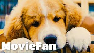 Лучшие фильмы про животных за все времена! Топ 10 фильмов