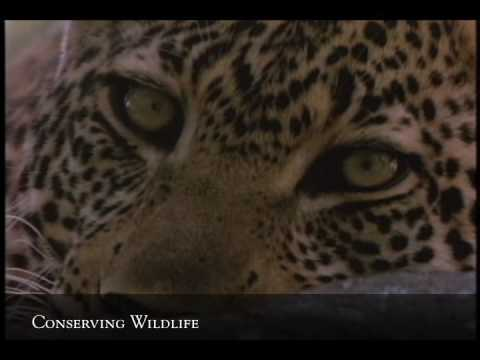 African Wildlife Foundation - Conserving, Protecting, Empowering