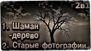 Истории на ночь (2в1): 1.Шаман-дерево, 2.Старые фотографии