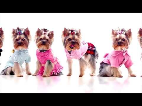 вяжем одежду для собак своими руками выкройка