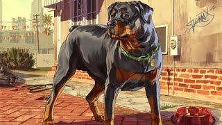 GTA 5: how to get a dog - (GTA 5 dog) - PARODY