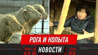 Скотокрады держат в страхе сразу 4 посёлка Алматинской области