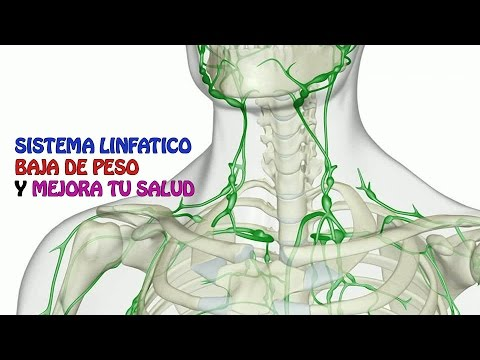 sistema LINFATICO ,elimina HINCHAZON DEL CUERPO Y BAJA DE PESO ...