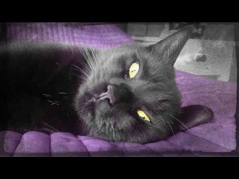 Black Cats Can Creep You Out When They Just Stare! Black Cats Especially Creepy At Happy Halloween