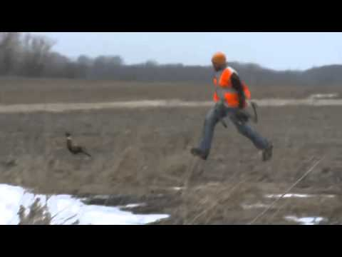 Hunter throws his bow at a pheasant when it runs away with an arrow stuck in it