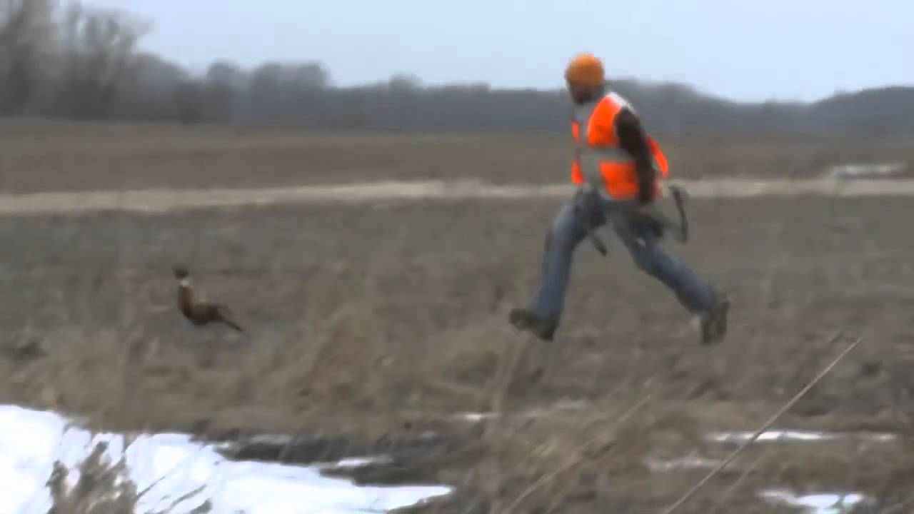 Hunter Throws His Bow At A Pheasant When It Runs Away With An Arrow Stuck In It Youtube
