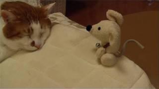 ねずみのチュウ太が、猫のニャオの首に鈴を付けに行くお話だよ。今回は...