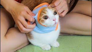 【花花与三猫】给猫咪换上新衣服,主人感觉它开心到变形,猫:妈这个有点紧……