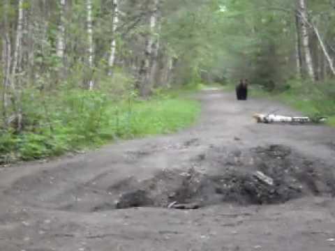 Смотреть встреча с медведем онлайн