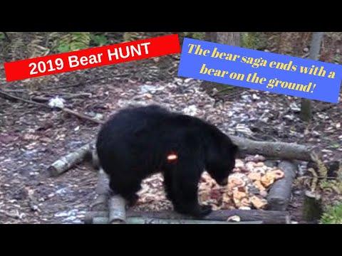 Minnesota Bear Hunting Saga | Bowhunting Bears