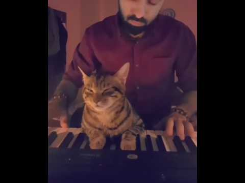 Sleepy cat in owner play piano