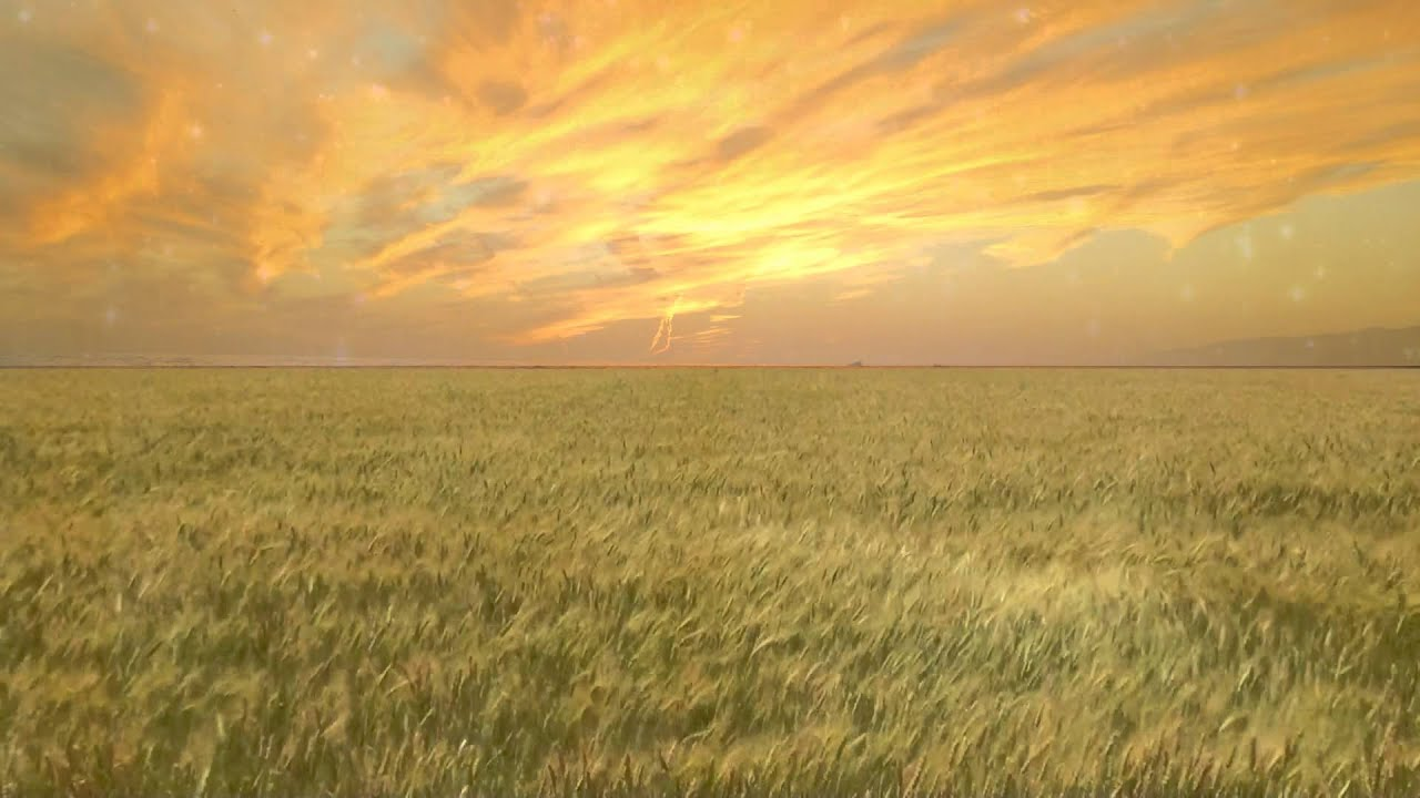 Animated Sunset Wallpaper Wheat Field Free Creative Commons Particle Motion