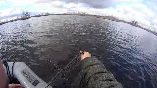 Рыбалка на сети на неизведоном болоте неплохой улов