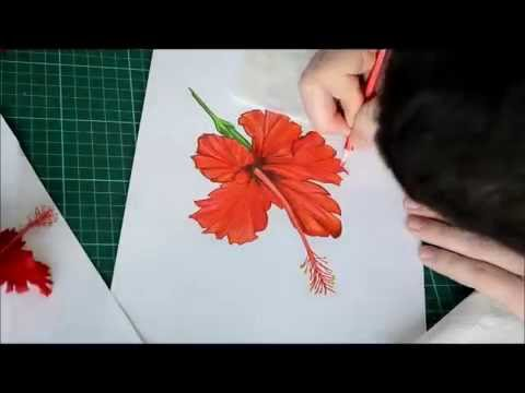 Hibiscus Flower Drawing Youtube