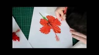 Apatche Revealed - Time-lapse Drawing, Hibiscus Flower