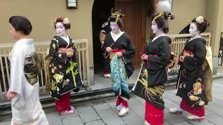 新年挨拶回り 宮川町の芸舞妓さんmaiko and geiko ceremony in kyoto miyagawa-cho