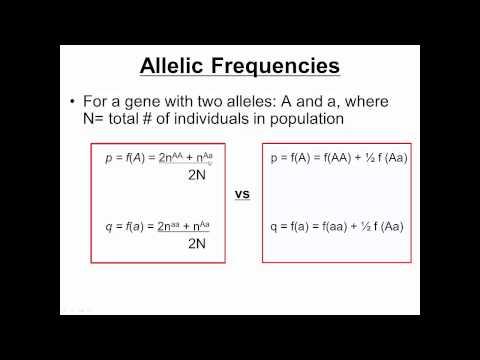 Population Genetics I (Hardy Weinberg)