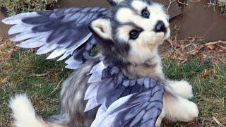 Летающая собака