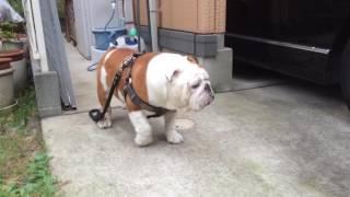暑くて散歩なんて無理〜〜