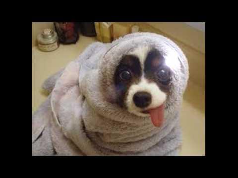 смішні картинки про тварин))))))))))) - YouTube
