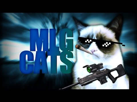 MLG CATS