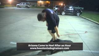 Arizona Come To Heel Advanced Lesson - Off Leash K9 Training Houston