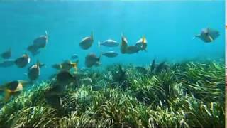 La brisa y las olas; una belleza del mar que son sólo un disfraz de lo que se esconde debajo