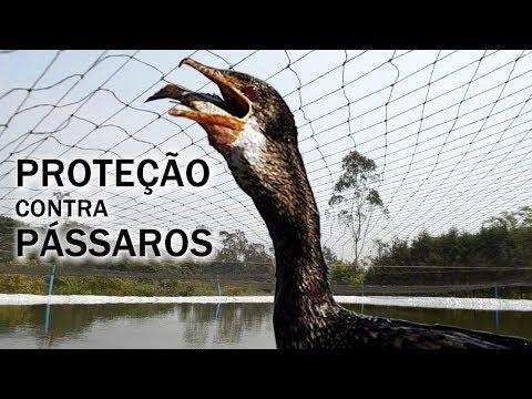 TELA DE PROTEÇÃO NOS LAGOS DO MANÉ Canal Saalada