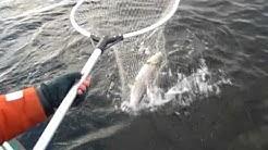 Trout fishing in Kokkola