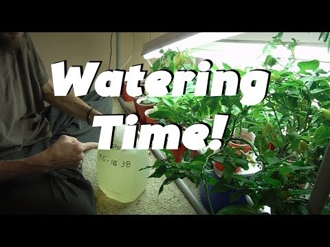 Watering Time: Super Hot Peppers