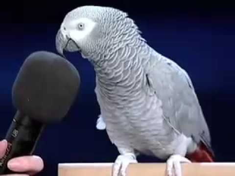 Einstein the bird