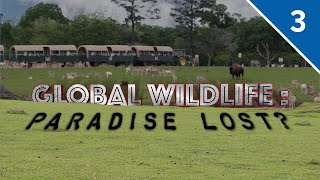 Global Wildlife: Paradise Lost? (Part 3/3)