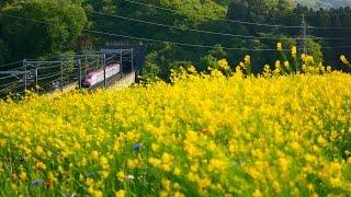 菜の花と東北新幹線2017 撮影記 2017-5-7
