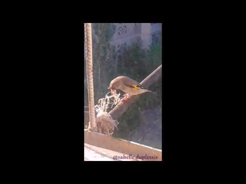 «Сонник Птица приснилась, к чему снится во сне Птица»