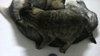 Легкая эротика. Кот и собака