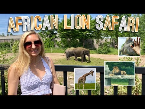 CRAZY AFRICAN LION SAFARI EXPERIENCE! (TORONTO)