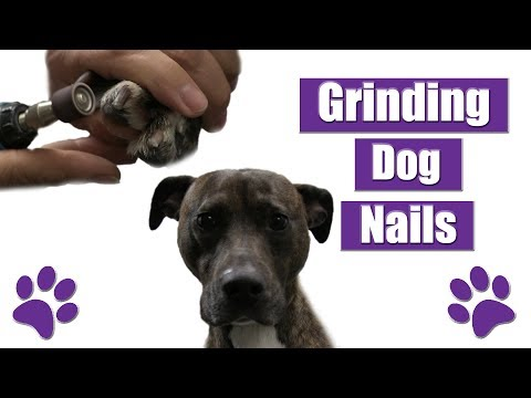 How To Grind Dog Nails