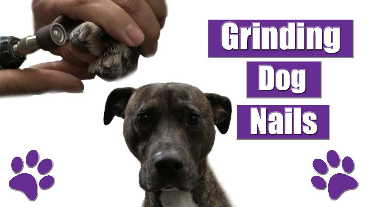 The 6 Best Dog Nail Grinders of 2021 [+ How to Grind Your Dog's Nails] 3