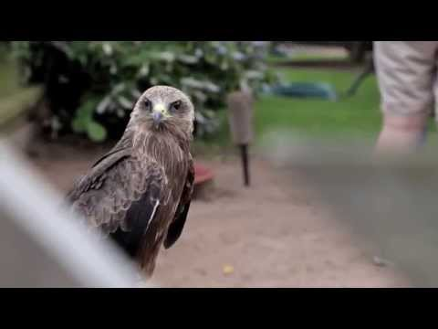 International Centre for Birds of Prey (Newent, Gloucestershire) - Video Taster