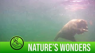 Amazing Footages Shows Bears Catching Fish Underwater