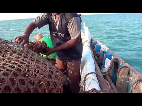 Fishing near rameshwaram