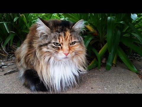Австралия, Животные Каково жить котикам в Австралии