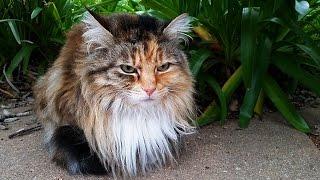 Австралия, Животные - Каково жить котикам в Австралии