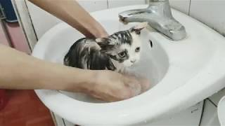 Tắm Cho Mèo Con / How To Wash A Kitten