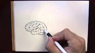 Free hand draw human brain. Bye vector on shutterstock