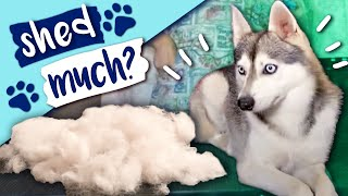 Puppy Grooming & Shedding Undercoat Step by Step Guide