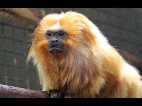 Smithsonian National Zoo - Washington, D.C. -  CRAZY ANIMALS!