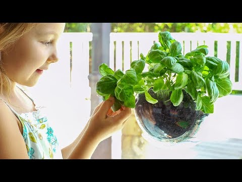 Urbz | Window Herb Planter