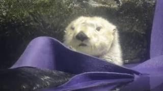 Sea otter cuteness