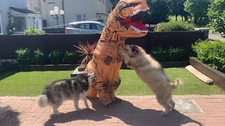Giant Guard Dogs Versus T-Rex Prank (Best Reaction Ever!!)